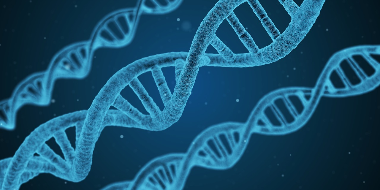 Protocolo ADN