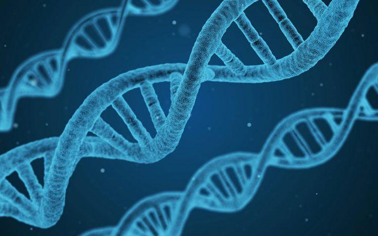 ADN protocolo OPF